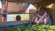 « Agriculture, paysannerie et monde rural en Algérie à l'épreuve des politiques libérales (1990- 2015) »